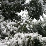 Snow trees blog image small
